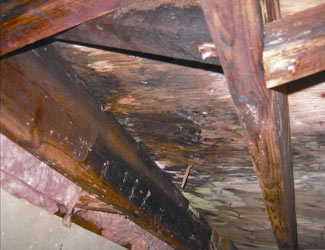 mold and rot in a Ogden crawl space